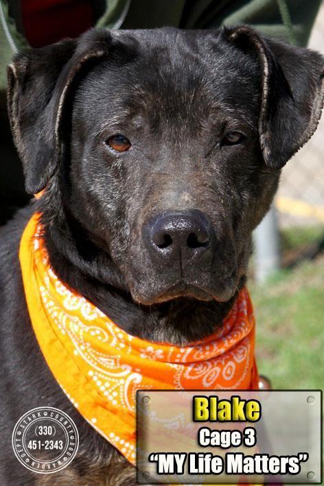 Stark County Dog Pound Adoptable Dogs