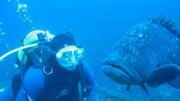 Diving with the Groupers. #Azores