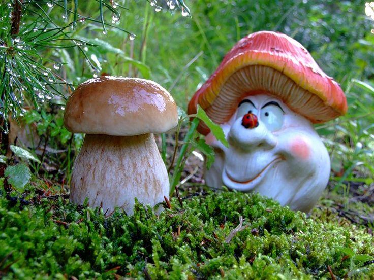 Голосовые открытки, прикольные картинки грибов