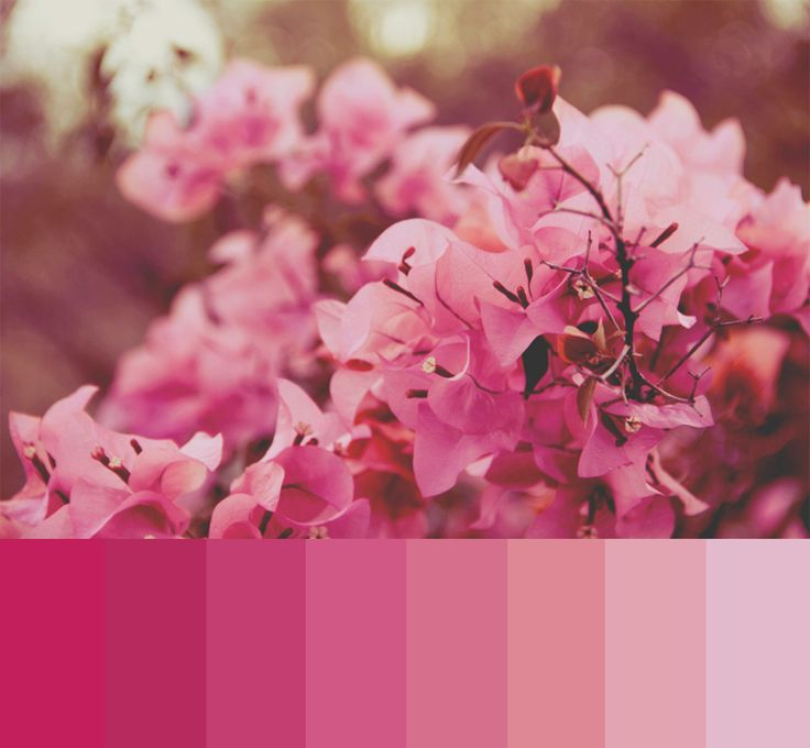 Pretty in pink! This spring, pink gets grown up in tones that range from rich raspberry to dusty rose. Less electric than their predecessors, this color palette is subdued giving it less shock appeal!  Photography by Michelle Lartigue