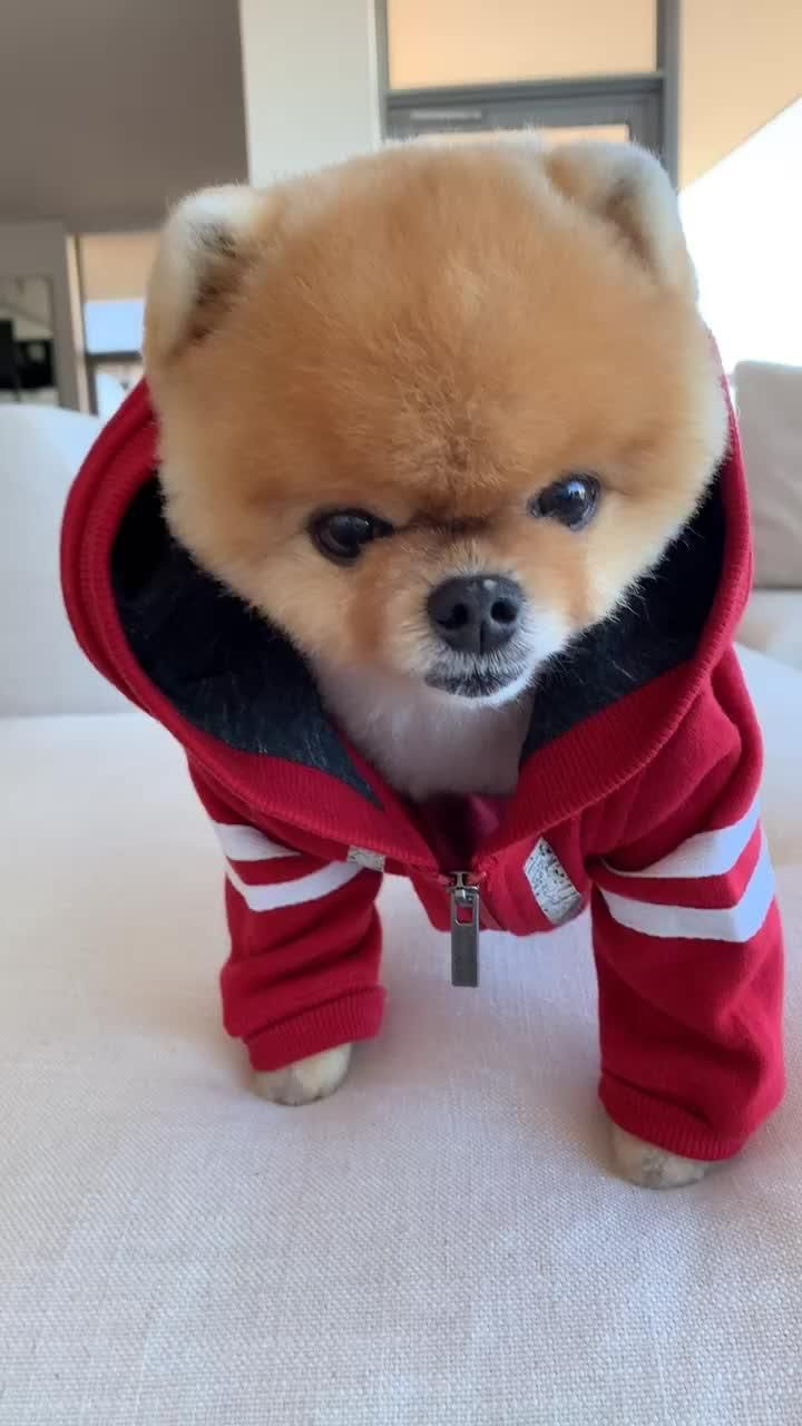 Download Tiktok To Watch More Funny Videos Of Cuties Puppy Life S Moving Fast So Ma Cute Puppy Videos Cute Animals Puppies Cute Animals With Funny Captions