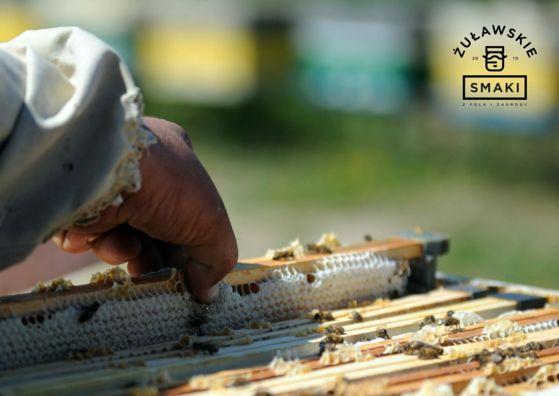 Miód z pasieki Pana Gustawa – prosto z Żuław! #miód #honey #pasieka #kuchnia #Polska #tradycja #food #Poland #Żuławy