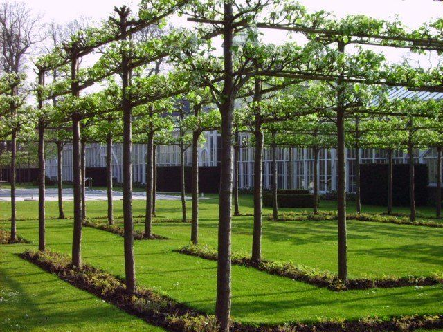 Great way to have fruit trees but not create too much shade,