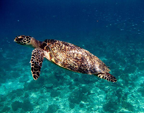 5 reasons to go to Gili Islands