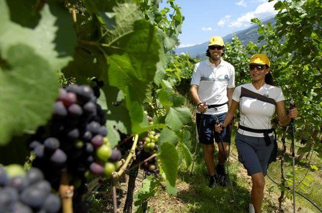 Nordic Waldking durch Wein- und Obstgärten