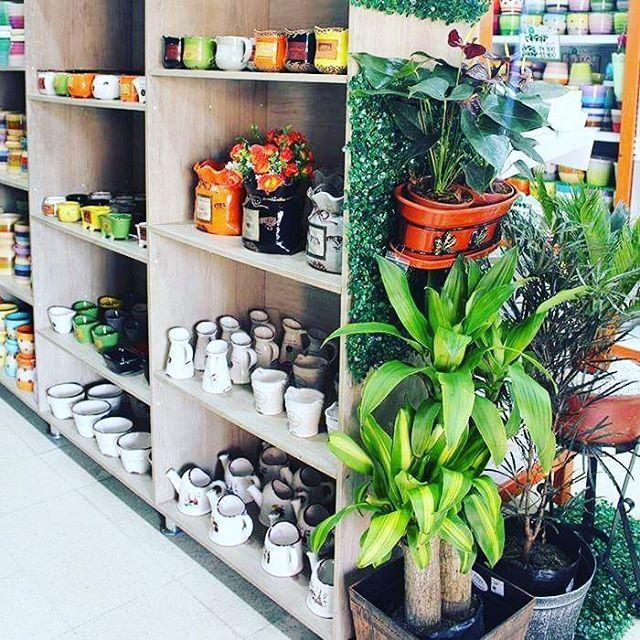 #DecoOutlet, 🌺 🌷 Somos La Tienda Especializada en Jardinería y Decoración 📞 PBX: 3222023 - 💻 Compras Online en www.DecoOutlet.co Visítenos en cualquiera de nuestros 4 puntos de venta en Medellín