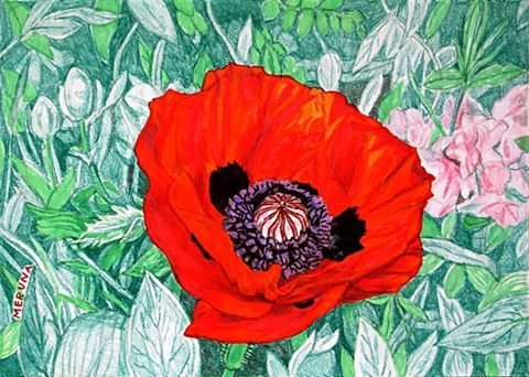#poppy #drawing #art #flower #red #poppies #pencil #leaves #nature #plants #flowers #illustration