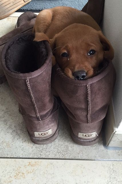 The Dodo - 17 Pets Who Have A Serious Shoe Obsession
