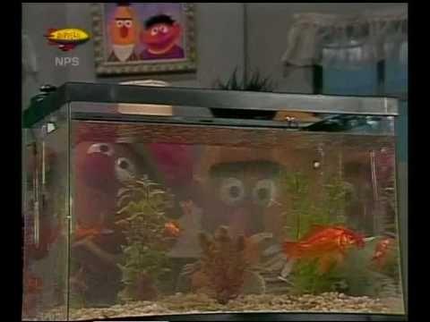 Bert & Ernie - Vissen kijken