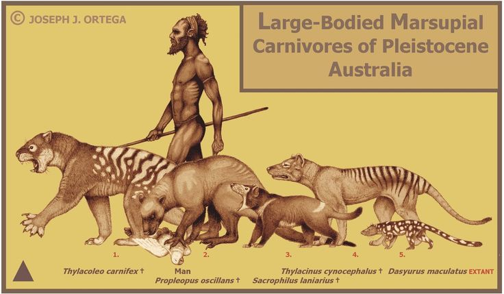 Illustration of Carnivores of Pleistocene Australia - by Joseph J. Ortega