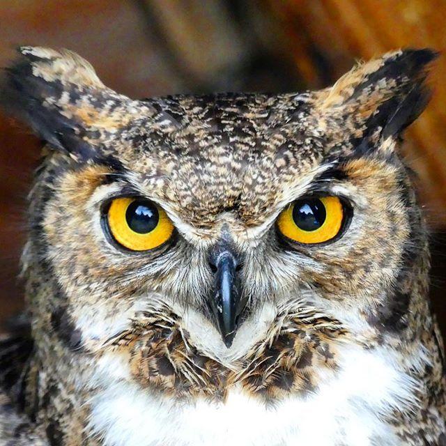 I am watching you..! ----------------------------------------- Te estoy viendo! Photo: @tomasvialp #birdwatching #outdoors #sport #nature #friends #explore #discover #bird #owl #wildlife #explore #natgeo #travel #patagonia #tucuquere