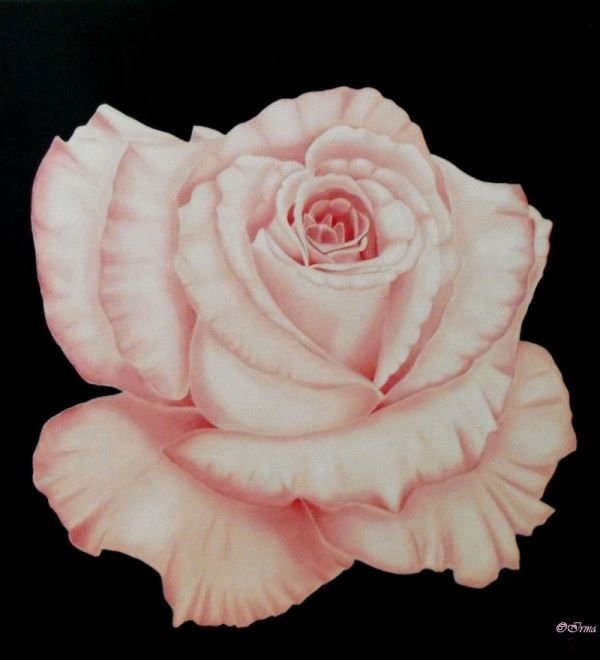 Irma Endrey: Pink rose; oil on canvas