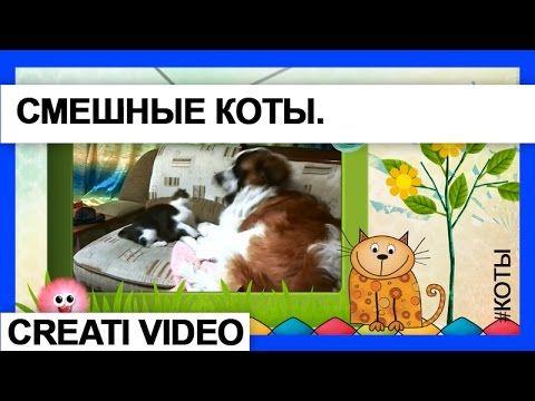 Видео клип Нежные и строптивые Коты и Кошки.  Серия 15 #Видеоклип