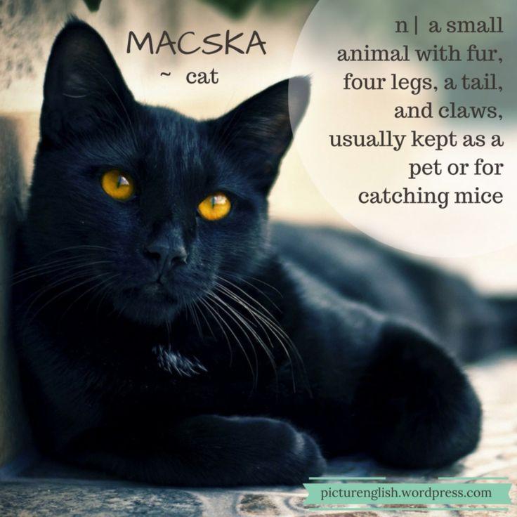 Cat / Macska