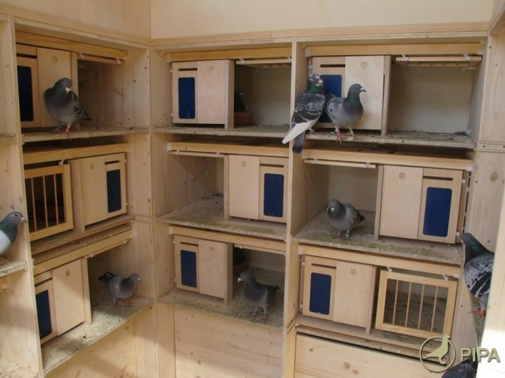 Pin by jamesp on coop | Pigeon loft, Pigeon, Home Decor