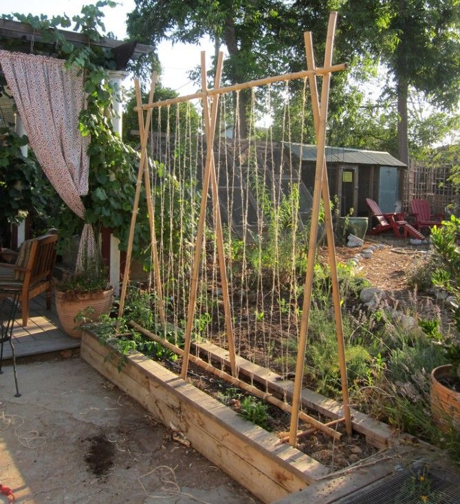 Simple Vegetable Garden Ideas At Home: 25+ Best Ideas About Pea Trellis On Pinterest