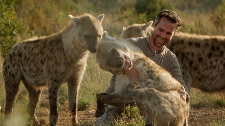 Enjoy this Animal Planet video: The Man Who Tickles and Plays with Hyenas.   After more than 15 years of studying hyenas, Kevin Richardson, has earned his spot in a clan of these animals. Despite the dangers he plays and even tickles these unpredictable predators.  eZOO contributes with 50% of our profits to the protection of biodiversity.  Now you can help to make it happen and begin the eZOO Experience!  We need you! Please, join us on Indiegogo: http://igg.me/at/Cheempo