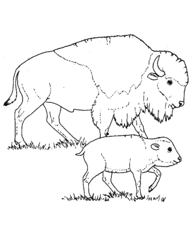 Wild animal coloring page   Bison mother and calf Coloring page