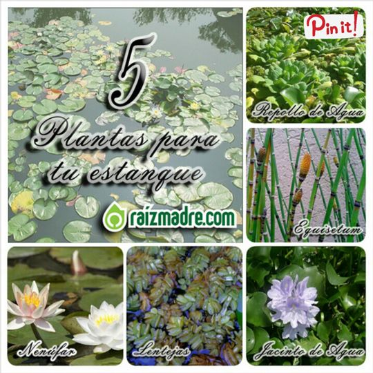 M s de 1000 ideas sobre peque os estanques en pinterest for Plantas para el jardin todo el ano