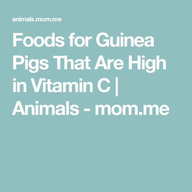 Foods for Guinea Pigs That Are High in Vitamin C | Animals - mom.me