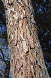 Corteza De árbol - Descarga De Over 50 Millones de fotos de alta calidad e imágenes Vectores% ee%. Inscríbete GRATIS hoy. Imagen: 67560547