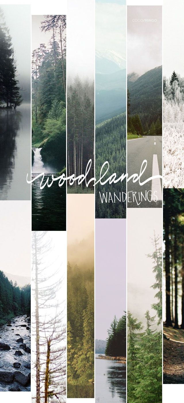 Woodland wanderings -via COCO / MINGO