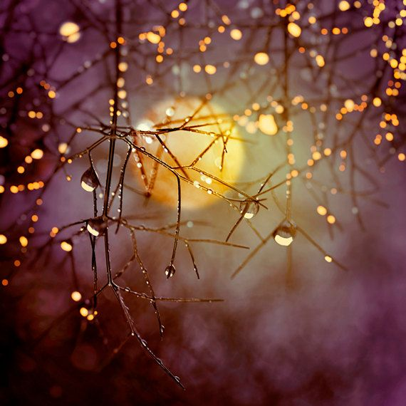Nature Photography, Harvest Moon, Trees, Raindrops, Night Sky, Autumn, Fine Art print, Home Decor.