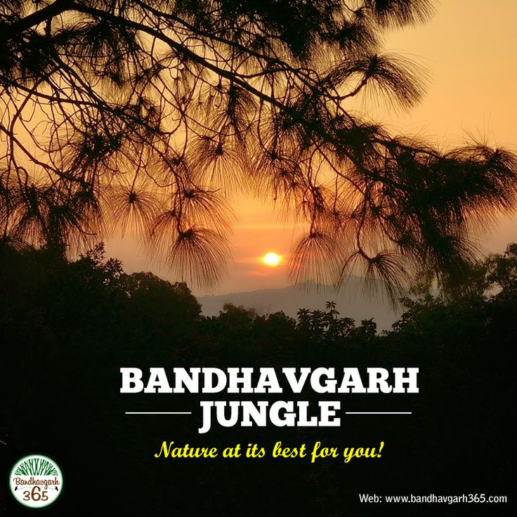 """""""#BandhavgarhJungle"""" Nature at its best for you!!!"""