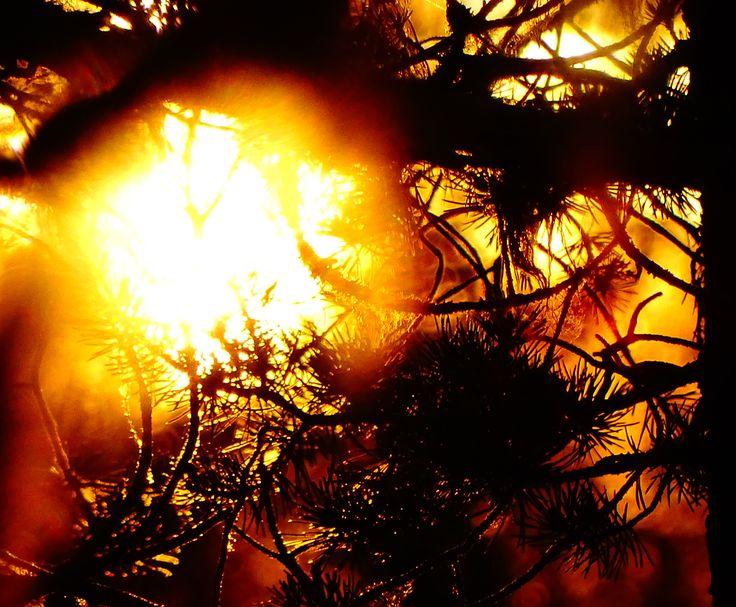 sun behind a tree