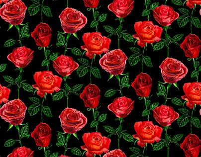 """Check out new work on my @Behance portfolio: """"Belle - Red Roses on Black"""" http://be.net/gallery/60794789/Belle-Red-Roses-on-Black"""
