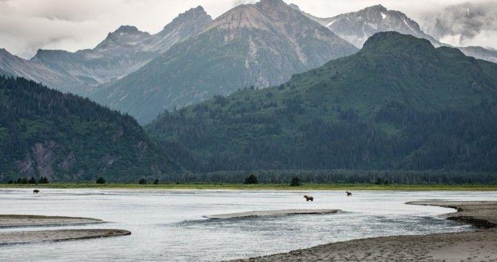 Medvede pri jazere Clark národný park, Národné parky v USA