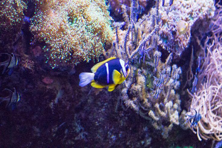 Barriera corallina 5