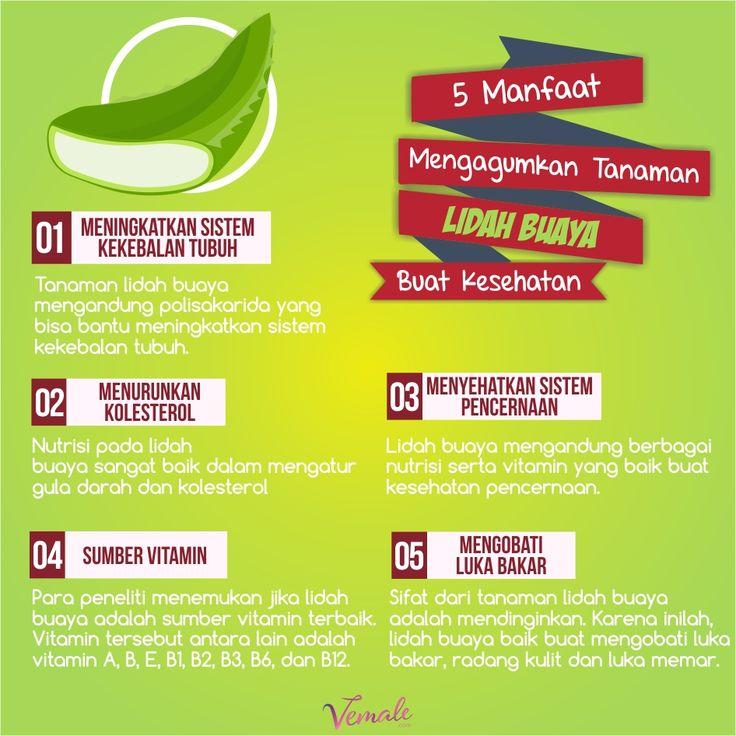 Nutrisi serta vitamin dalam tanaman lidah buaya bisa mencegah dan mengobati beberapa risiko penyakit. Kece banget ya!  #vemaledotcom #ruangvemale #sharingajasis #january #lidahbuaya #aloevera #infografis #vemalegrafis #good2share