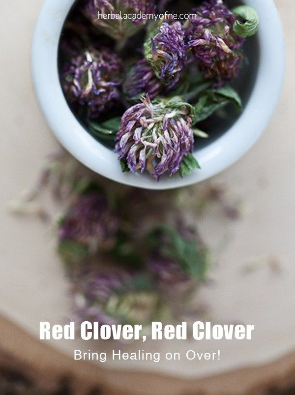 Red Clover, Red Clover…Bring Healing on over! - Herbal Academy of New England