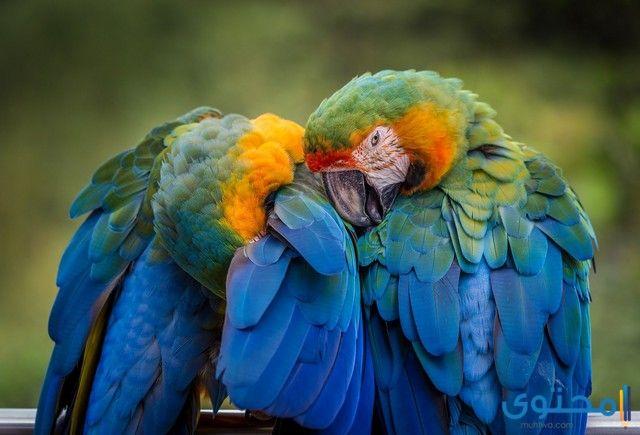 تفسير رؤية حلم الببغاء في المنام ومعناه Colorful Parrots Parrot Parrot Image