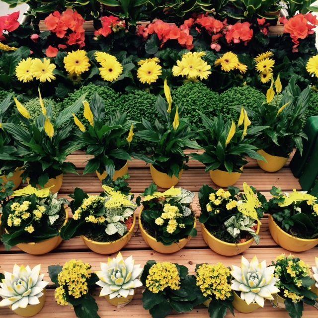 Květinové šílenství v Hornbachu #3