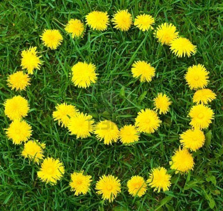 Cute Dandelion Picture