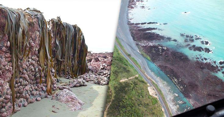 Un terremoto en Nueva Zelanda ocasionó que el fondo del mar se levara 2 metros y ahora está al descubierto en la costa de Waipapa, algo que no había pasado