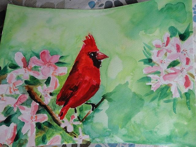 watercolour cardinal