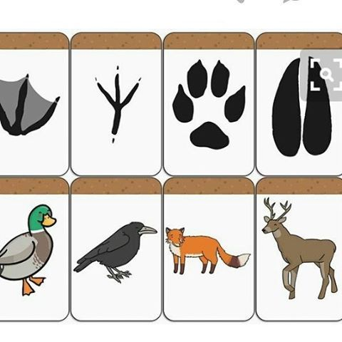 Hadi bir etkinlik ile güne veda edelim. Hayvan izleri ya da ayak izleri. Önce bir kaç hayvan belirleyip ayak izlerinin çıktısını alıp yerlere serpiştiriyoruz. Sonra eve/sınıfa kim gelmiş bunlar kimler olabilir diyoruz. (İnsan izi de kolabilirsiniz) Daha sonra büyüteç falan dedektif oluyoruz. Sonra hayvanlar, hayvanların isimleri, benzerlikleri, farklılıkları devam ediyoruz. Çocuklarda böylelikle hayvanları farklı açılardan tanımış oluyorlar. İyi eğlenceler :)…