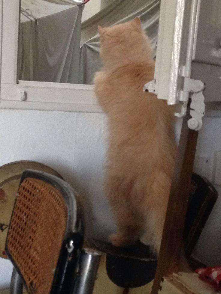 C'è chi è attratto dalla curiosità e va dove non potrebbe andare...