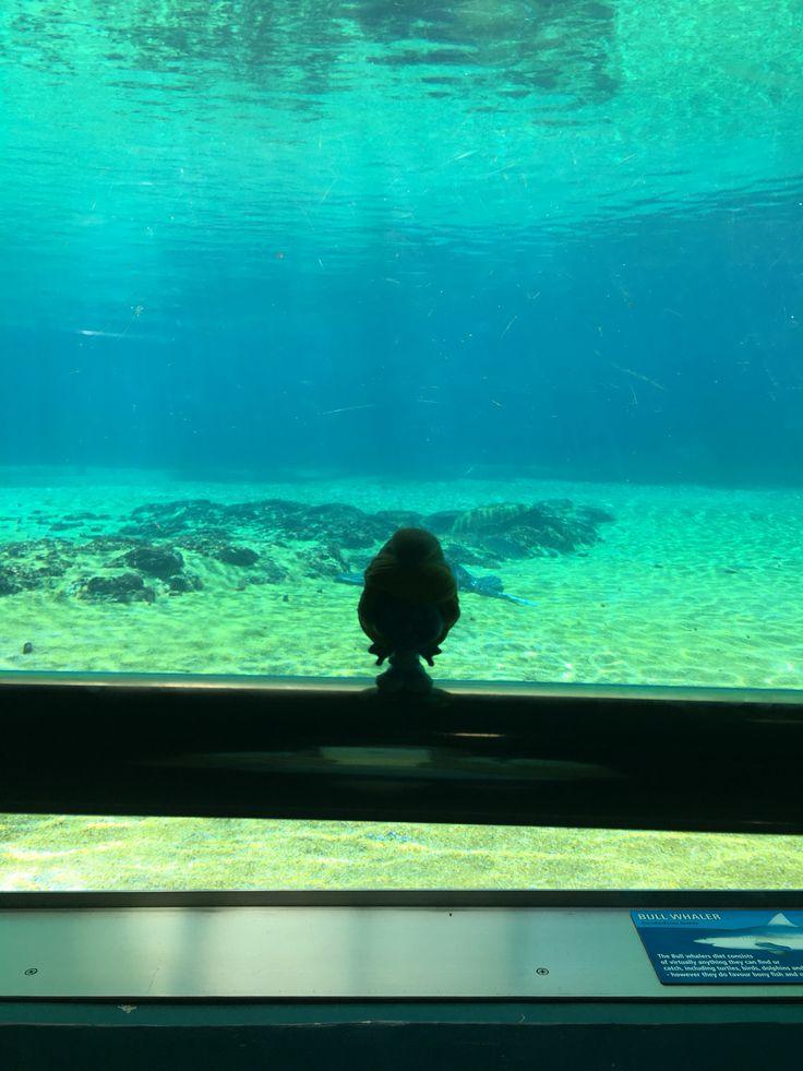 Smurfette at Shark Bay #SeaWorld on the Gold Coast