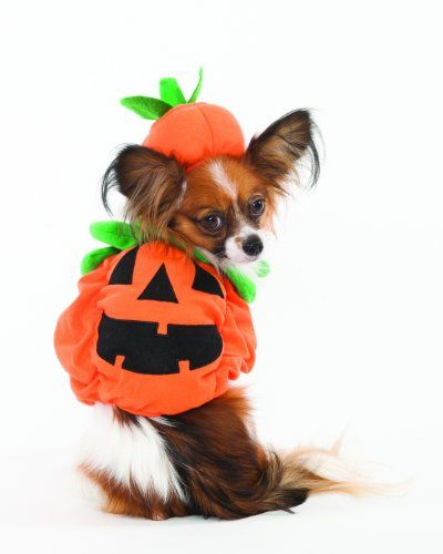 Fashion Pet Halloween Pumpkin Costume for Dogs, Small - http://www.thepuppy.org/fashion-pet-halloween-pumpkin-costume-for-dogs-small/