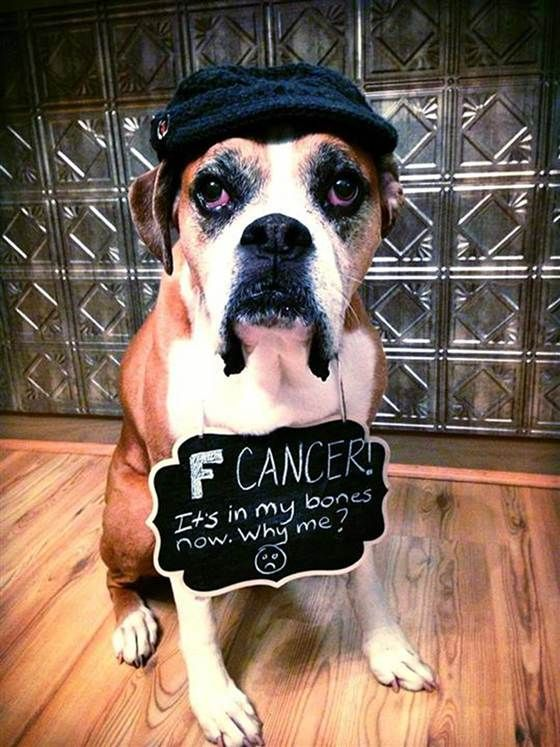 When her dog was diagnosed with terminal bone cancer, one awesome pet owner decided to create a bucket list for him including riding in a fire truck, eating a cheeseburger, and so many more fun things. We love this.