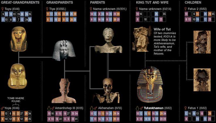 Nefertiti And Akhenaten Family Trees | ... and Other Civilization Investigations: King Tut's Family Secrets