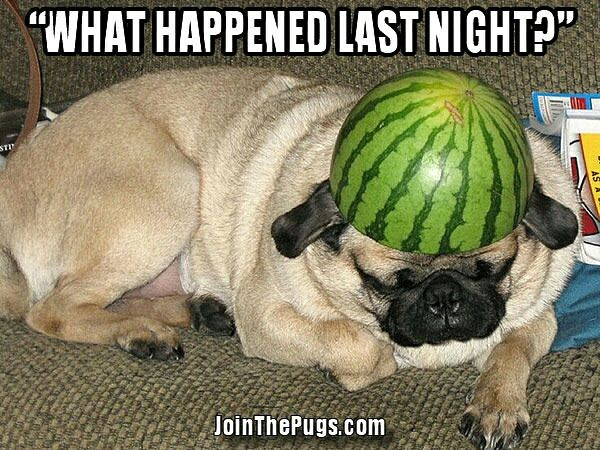 """I woke up and thought it was #friday 😢""  www.jointhepugs.com  #pugpower #pugsnotdrugs #pugpuppy #puglover #dogs #pugs #pugoftheday"