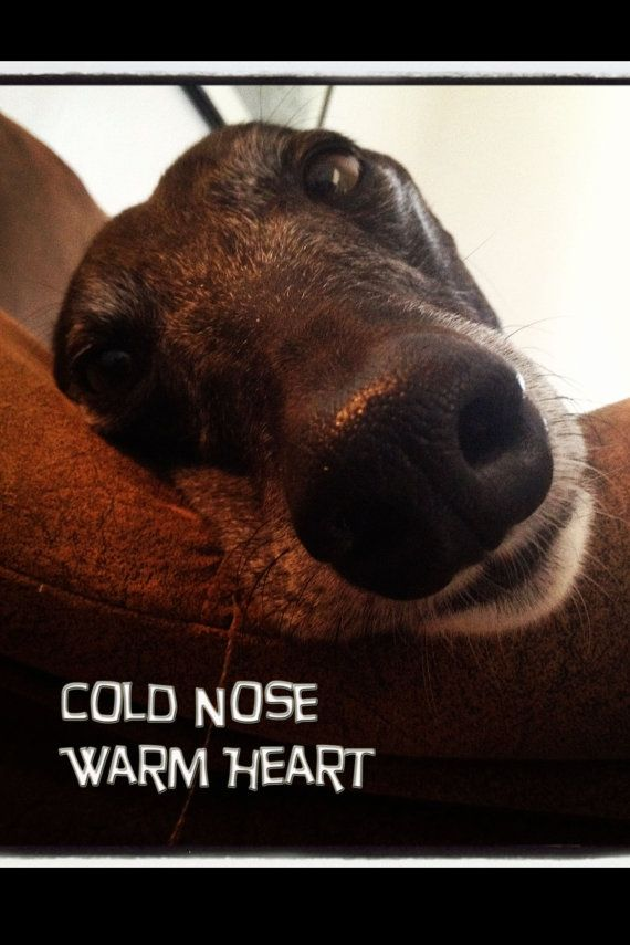 I Heart Whippets Facebook 166 best images about ...