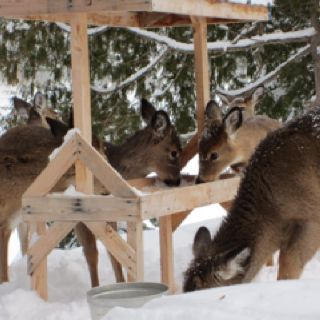 If we get to live in a place where deer visit I'd love to have a deer feeder :)