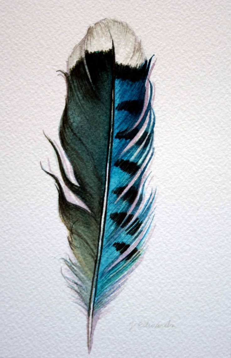 feathers | Original Watercolor - Feather Study 178 Blue Jay Feather - Nightly ...
