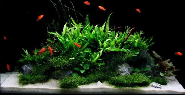 pinterest teki en iyi 23 aquaristik görüntüleri akvaryumlar